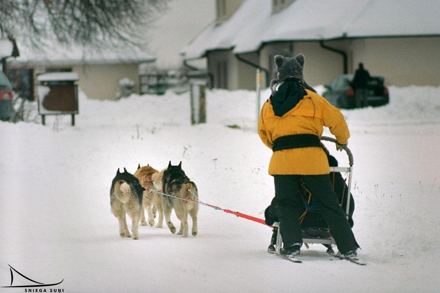 Sniega suņi