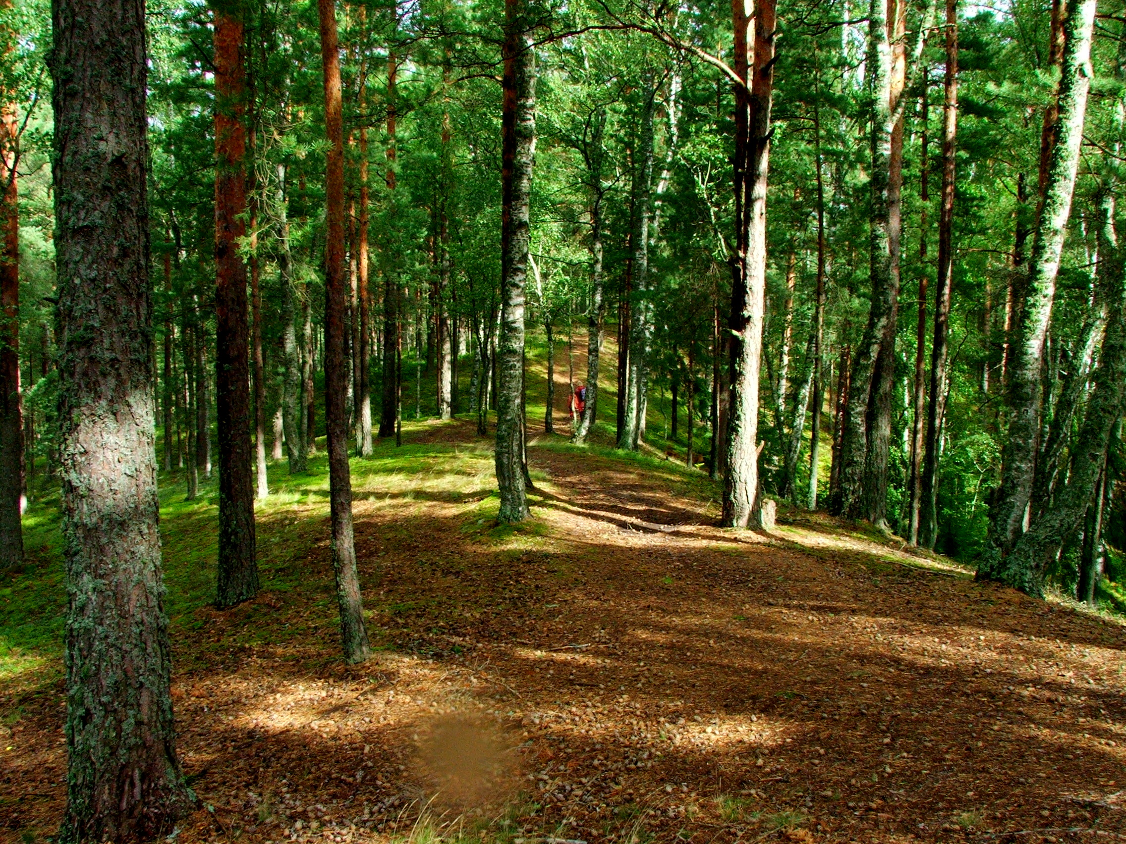 """Exhibition """"Natural values of Latvia. Forest"""""""