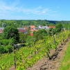 Sabile Wine Hill