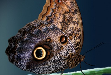 "Tropical Butterfly House welcomes you to its exhibit ""Miracle of Butterflies at Dusk"""