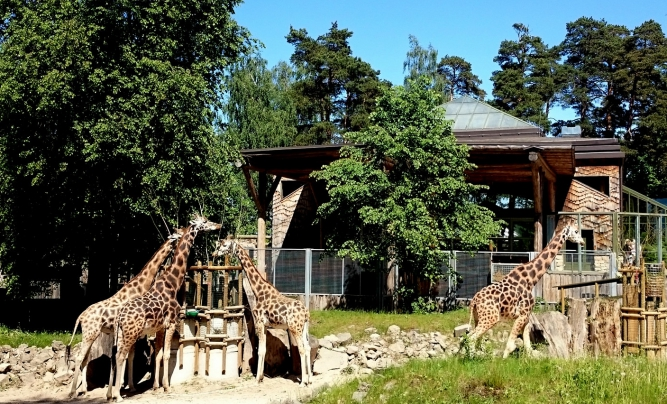 The number of visitors at the Riga Zoo continues to grow