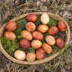 Easter eggs colored with onion barks and weeds.